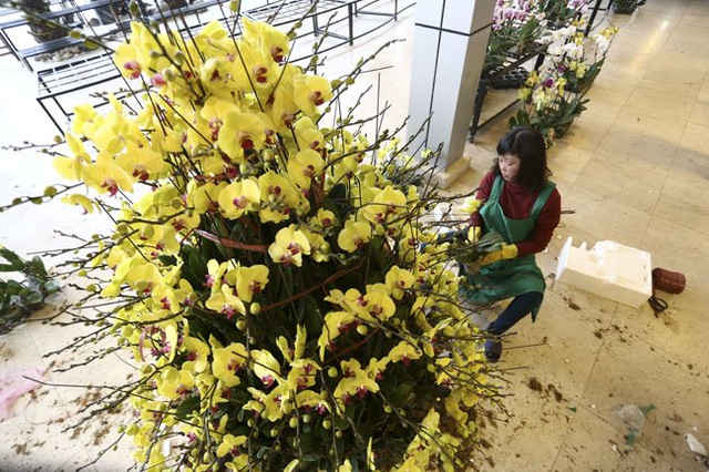 Một chậu lan hồ điệp vàng 9 tầng hoa, 300 cành có giá hơn 100 triệu đồng.