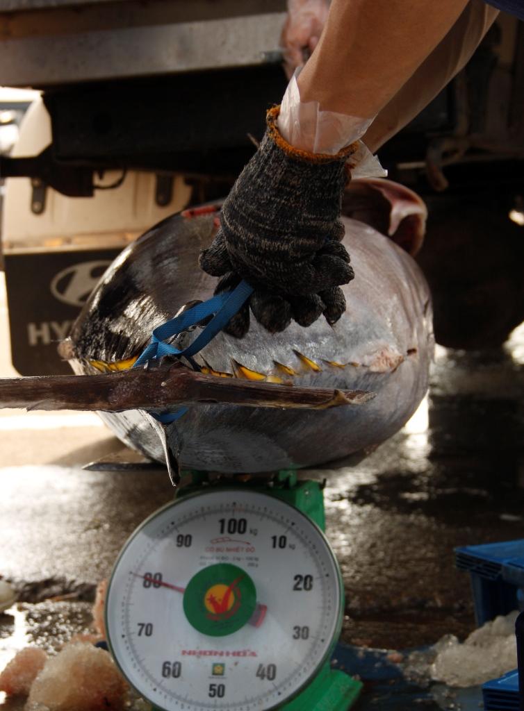 Cá được đưa lên xe đông lạnh để về chế biến