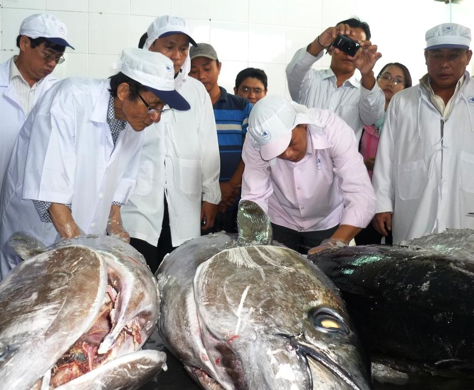 Chuyên gia Nhật Bản kiểm tra chất lượng cá ngừ đại dương của ngư dân Bình Định trước đó