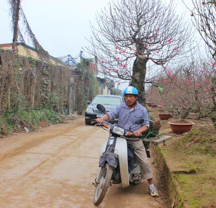 Bác Đường (Nhật Tân, Tây Hồ) chở cây đào với khoảng cách 2km được thù lao 100.000 đồng.