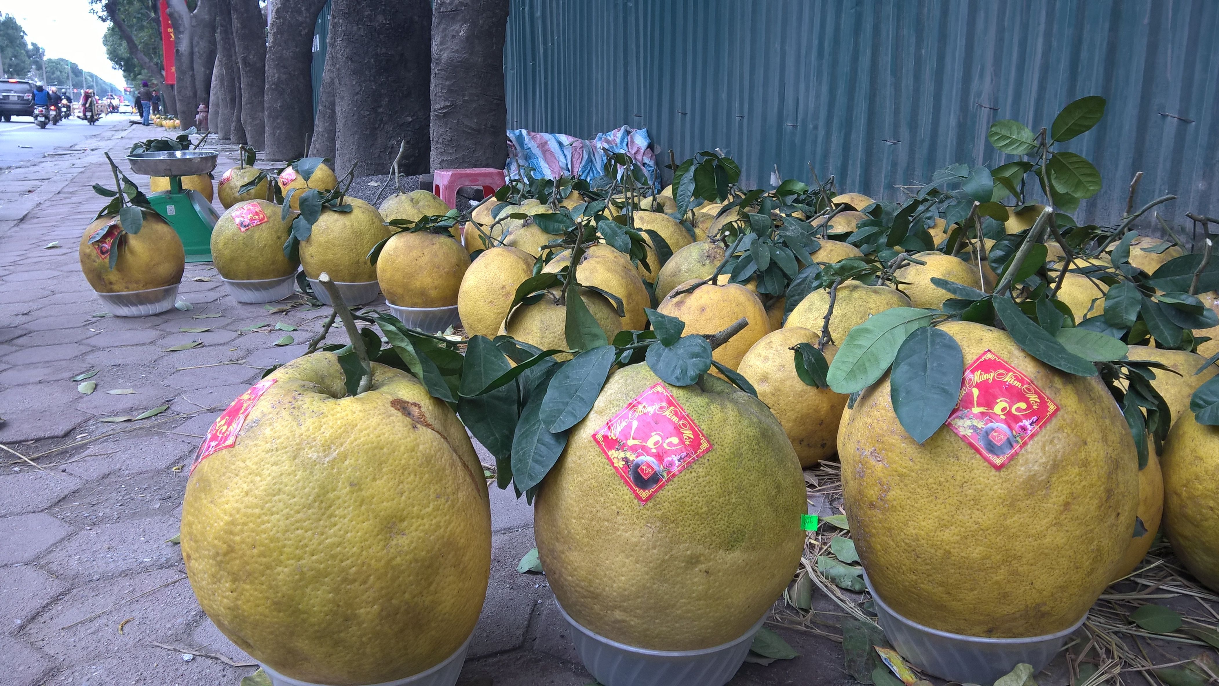 Loại bưởi nằm lăn lóc như lợn con tại vỉa hè Hà Nội. Khá nhiều người bán bưởi này dọc tuyến đường Phạm Văn Đồng