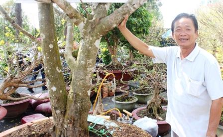 Ông Hương bên cây mai cổ thụ được ra giá 200 triệu đồngcủa mình