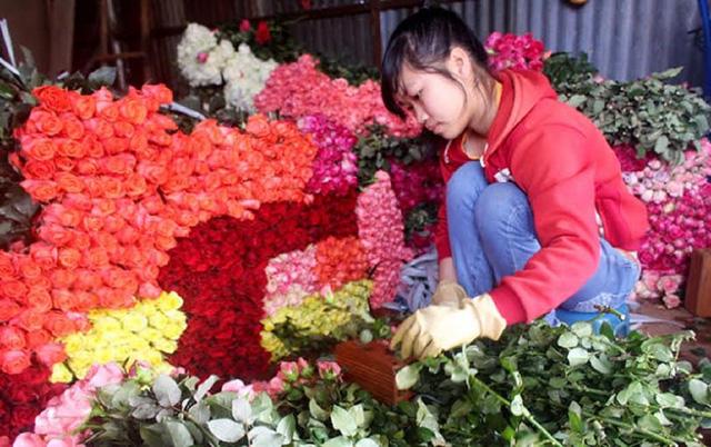 Hoa hồng Đà Lạt cho Valentine tăng giá 5 lần vẫn không đủ hàng.