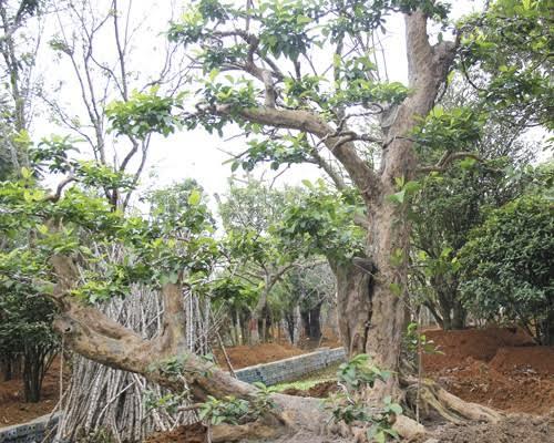 Đánh bạc siêu cây: Mua 30 triệu lãi 300 triệu