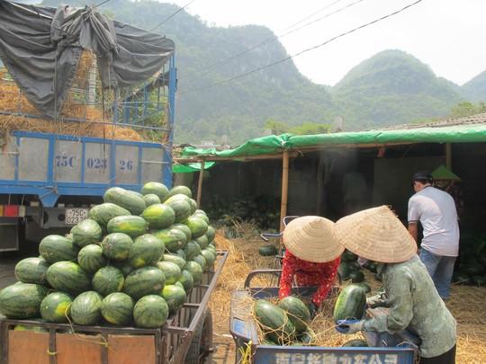 Trung Quốc là thị trường tiêu thụ dưa hấu lớn nhất của Việt Nam, chiếm khoảng 85-90% tổng sản lượng dành cho xuất khẩu và chủ yếu qua cửa khẩu Tân Thanh, tỉnh Lạng Sơn...