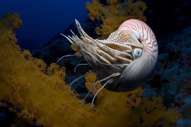 Một trong những món khoái khẩu của ốc Anh Vũ là ...cua biển.