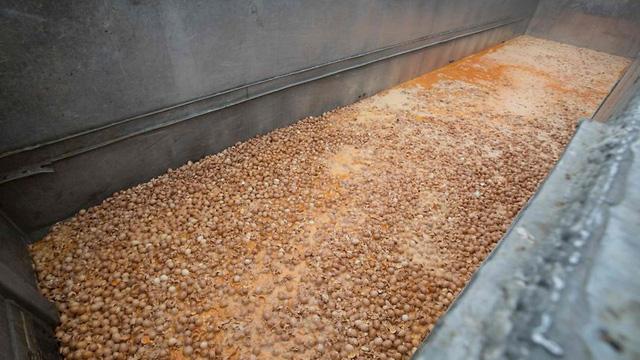 Các nông dân chăn nuôi gia cầm ở Hà Lan đã phải vứt bỏ trứng bị nhiễm thuốc trừ sâu fipronil hồi đầu tháng này.
