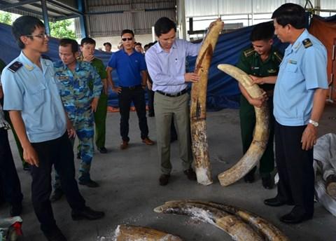 Đánh tráo, ăn cắp trên 150 kg ngà voi tang vật, một cán bộ Hải quan bị bắt
