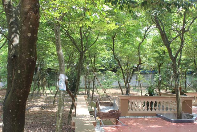 Vườn sưa 10 tuổi gần 100 gốc
