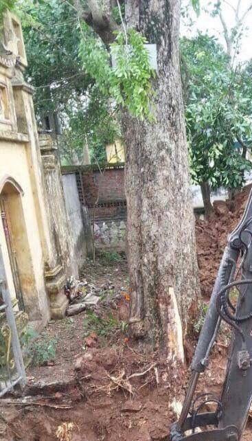 Vụ bán cây sưa 200 tuổi: Họ đã lừa dối dân làng như thế nào?