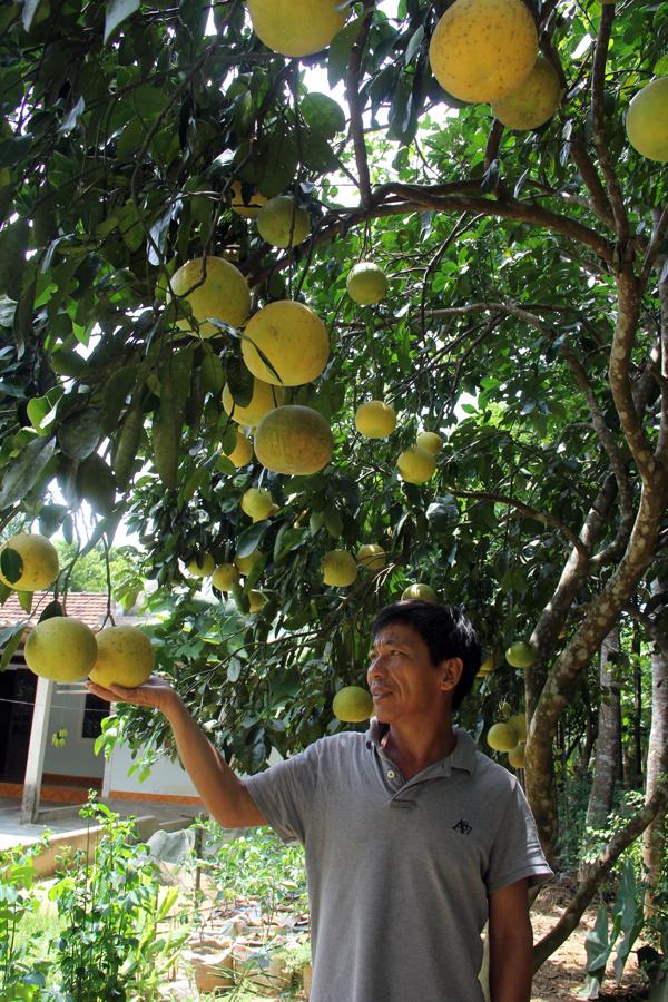 Cùng với gia đình chị Thanh, hàng ngàn hộ dân ở Hương Trạch, Phúc Trạch nói riêng và Hương Khê nói chung đã xuất bán bưởi trong dịp Tết Trung thu này.