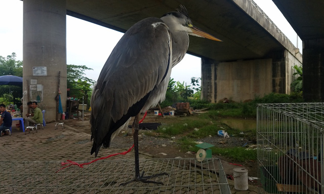 Chợ cóc chuyên bán chim trời