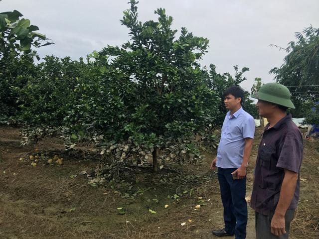 Tổng diện tích của trang trại thuộc Công ty cổ phần tư vấn Phú Giang bị ngập lụt là gần 30 héc ta