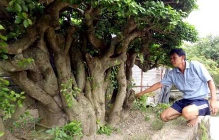 Anh Uy là người rất có duyên với cây cảnh, bonsai. Với anh cây cảnh không chỉ đem đến niềm vui, mà còn là cả giá trị kinh tế. Chính nhờ cây cảnh mà anh đã thoát ra khỏi cờ bạc và vươn lên làm giàu.
