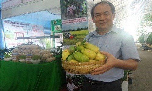 Giống bơ sáp ở Lâm Đồng cho quả dài như quả bí xanh.