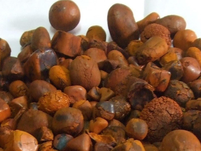 Sỏi mật trâu bò đắt như vàng ròng: 300 triệu/kg cũng khó mua