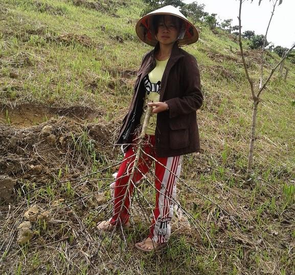 Một hộ nông dân phải nhổ bỏ toàn bộ diện tích cà phê 2 năm tuổi chết khô sau khi bón phân
