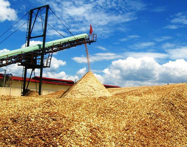 Bình Định: Trung Quốc ngừng mua, ngành dăm gỗ điêu đứng