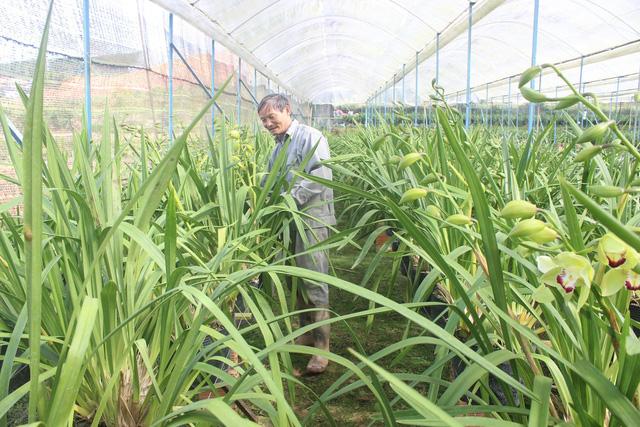 """Lâm Đồng:  """"Lão nông"""" lãi hơn nửa tỷ mỗi năm từ trồng địa lan"""