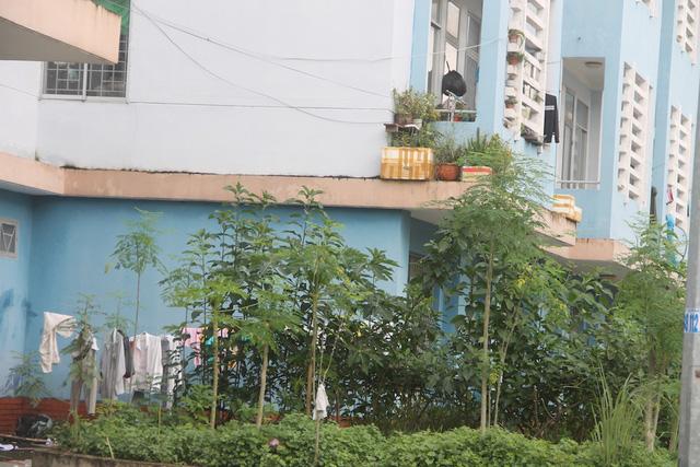 Bên trong khu dân cư bị bỏ trống, đầy bụi bặm