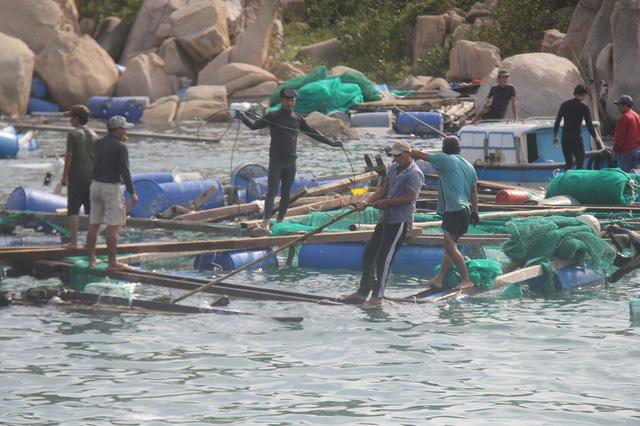 Lồng bè tan nát sau bão, thủy sản nuôi trồng ở Khánh Hòa suy giảm