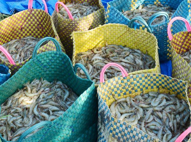 Cà Mau: Phạt hành chính 2 người Trung Quốc thu mua thủy sản trái phép