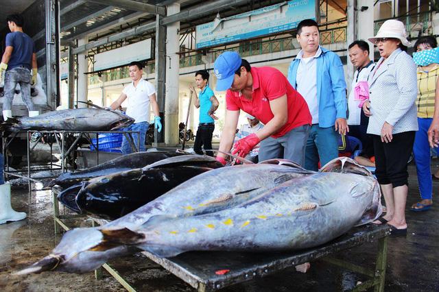 Hoạt động thu mua cá ngừ đại dương tại Cảng cá Hòn Rớ (TP Nha Trang, Khánh Hòa)
