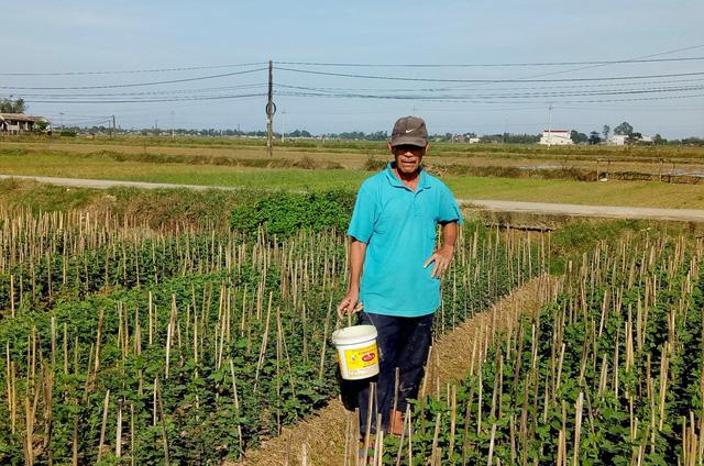 Ông Dương Quang (62 tuổi) lo lắng hoa không nở kịp Tết