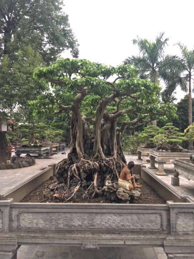 Theo giới chơi cây, giá trị cây cảnh trong khu vườn lên đến hàng trăm tỷ.