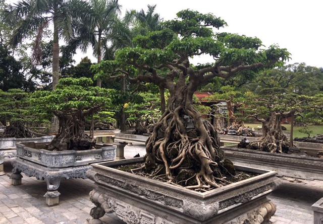 Ngoài ra, còn giá trị còn phụ thuộc vào độ tuổi của cây