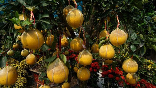Mỗi cây bưởi Diễn giá từ 20-50 triệu đồng.