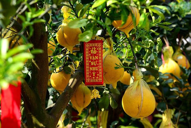 Trên những cây bưởi Diễn còn có thêm trái phật thủ lạ mắt.