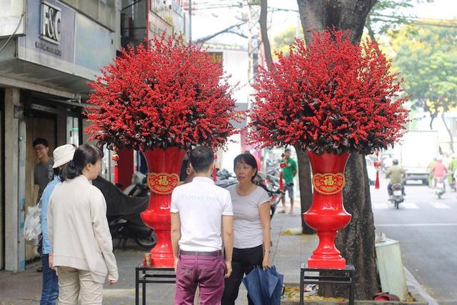 Đại gia Sài thành bỏ 160 triệu đồng mua cặp cây