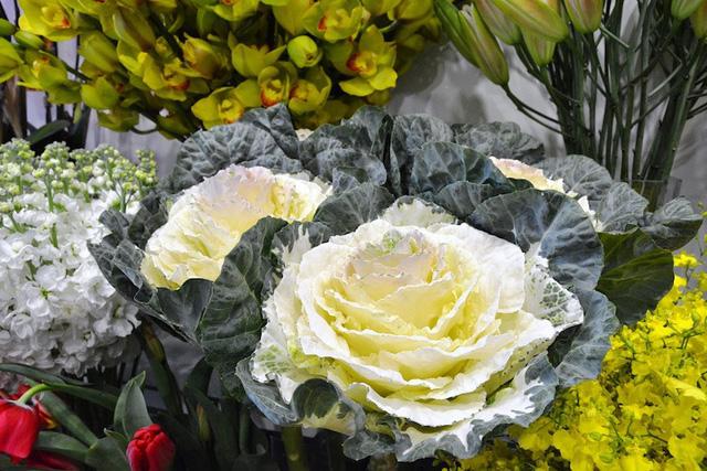 """Chậu mai hải đường """"độc"""", hiếm gặp được nhập khẩu từ Đài Loan. Trên cây có rất nhiều nụ hoa và đang được bán với giá 3 triệu đồng."""