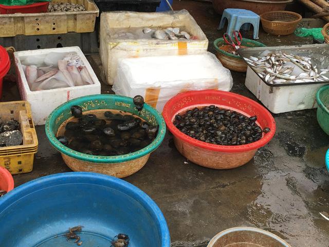 Ốc nhồi nhỏ 50.000 đồng/kg, ốc nhồi to 80.000 đồng/kg tại chợ. Đây là hàng loại 2 nhưng giá cũng đã cao hơn 10.000 - 20.000 đồng/kg so với trước Tết