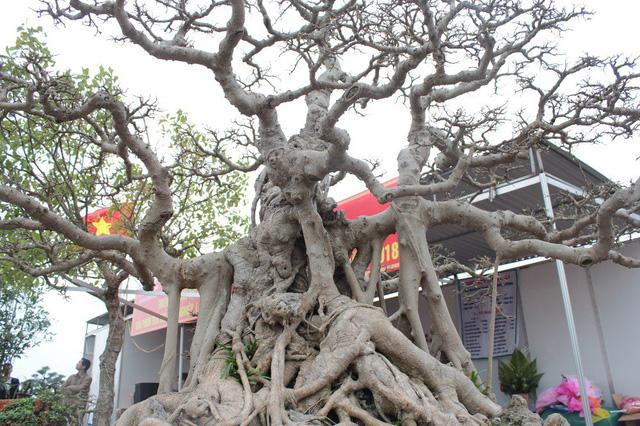 """Trong ba cây, hai cây có dáng trực, một cây có dáng """"phúc-lộc-thọ"""" thể hiện sự quy tụ, sum vầy."""