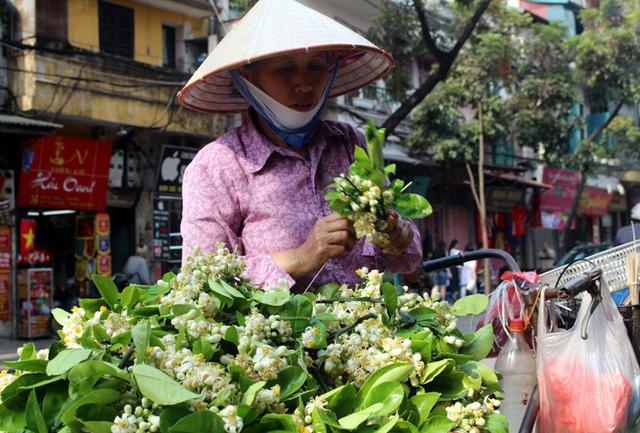 Hoa bưởi là thứ hoa đặc biệt chỉ có vào tháng 3, chủ yếu ở các tỉnh phía Bắc nhất là Hà Nội