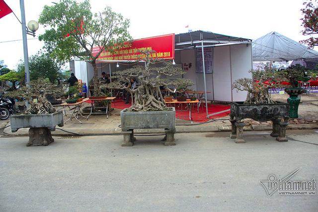Bộ ba cây sanh