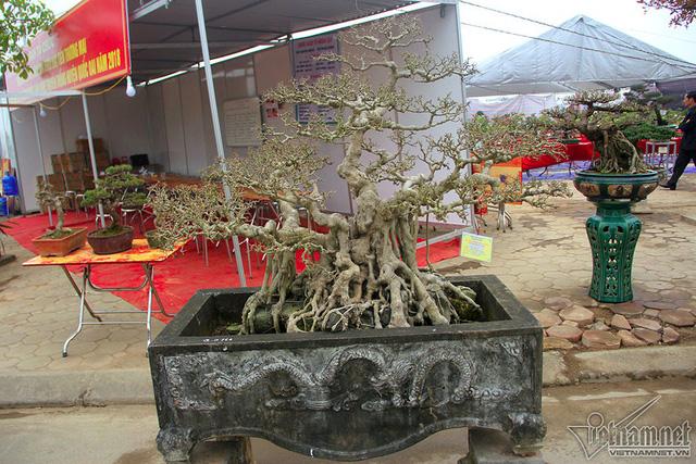 """Một cây có dáng """"phúc-lộc-thọ"""" thể hiện sự quy tụ, sum vầy"""