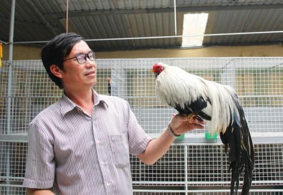 Chú gà đạt giải nhất cuộc thi gà cảnh Tân Châu miền Trung của anh Bùi Mạnh Dũng. Ảnh: Ngọc Vũ.