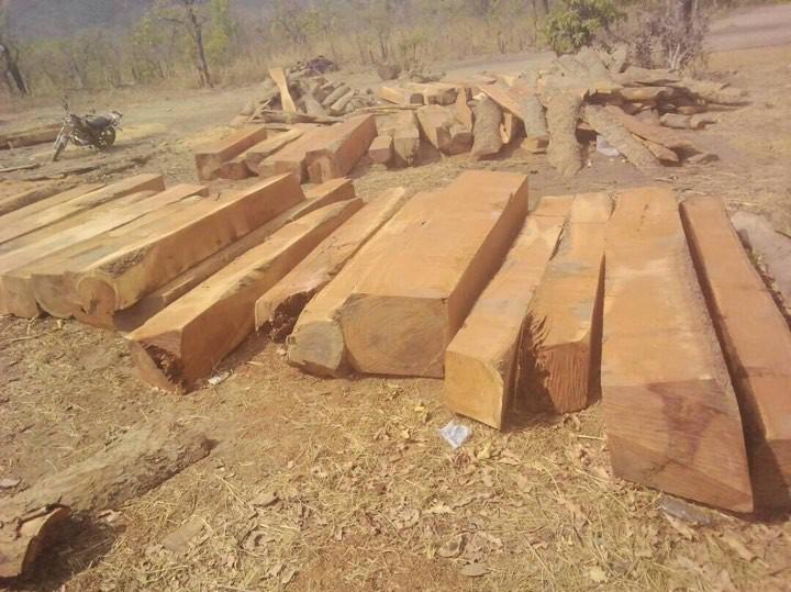 Các nước châu Phi đã cấm khai thác gỗ
