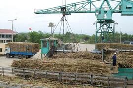 Chưa hết lao đao, ngành mía đường đã đặt thêm mục tiêu