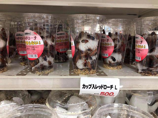 Những hộp gián được bày bán trong một siêu thị tại Nhật Bản với giá 500 Yên.