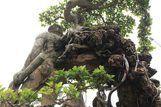 Theo chủ nhân của tác phẩm, cây Thạch Sanh xuất hiện lần đầu tiên tại Festival Sinh vật cảnh Thủ đô năm 2016. Đây là lần xuất hiện thứ hai.