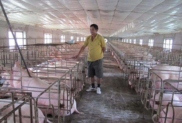 Giá lợn tăng bất thường: Nguy cơ lợn Trung Quốc tràn vào Việt Nam