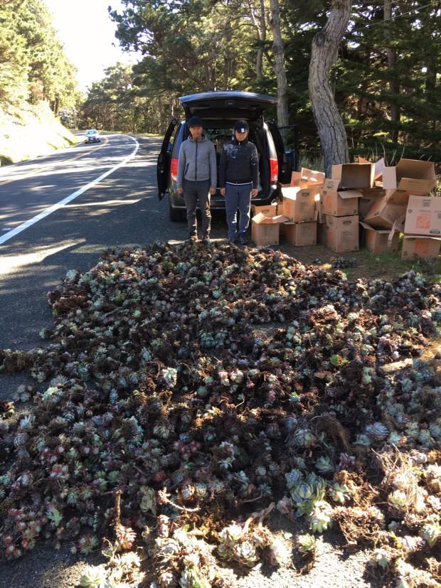 Một chiếc xe vận tải lớn ở bang Baja California chất đầy 4.746 cây sen đá chuẩn bị bán sang Châu Á nhưng đã bị bắt giữ.