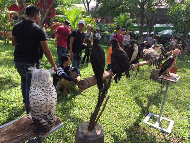 Nhiều người thích thú ngắm chim đại bàng
