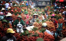 Hàng trăm tấn vải thiều Bắc Giang đã xuất khẩu đi các nước