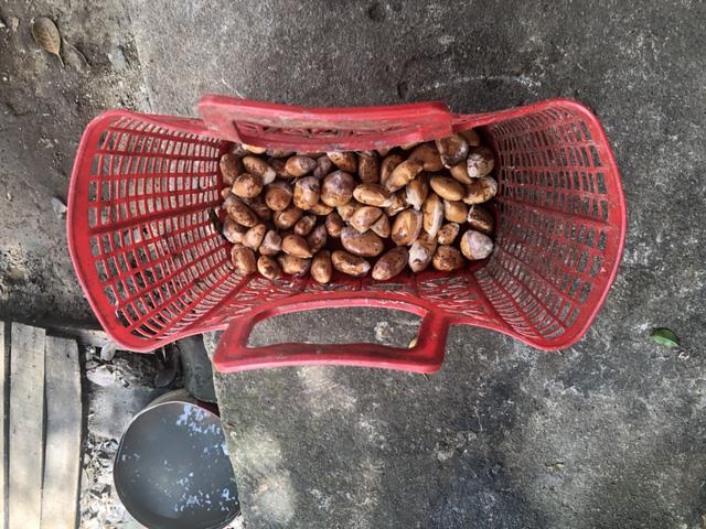 Những hạt sầu riêng như thế này được thu mua với giá 65 ngàn đồng/kg