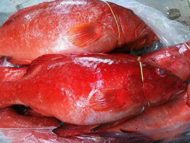 Ăn cá mú đỏ 10 triệu đồng/kg, nhậu bọ xít rang... lấy sức thức mùa World Cup